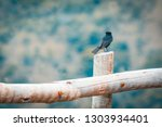 free black bird perched on a... | Shutterstock . vector #1303934401