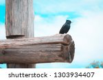 free black bird perched on a... | Shutterstock . vector #1303934407