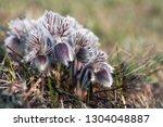 floral spring summer background.... | Shutterstock . vector #1304048887