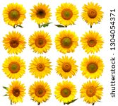 Sunflowers Head Collection Isolated White - Fine Art prints