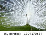 wonderful display of white... | Shutterstock . vector #1304170684