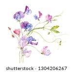 bouquet of sweet pea flowers.... | Shutterstock . vector #1304206267