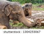 the elephant is a wonderful ... | Shutterstock . vector #1304253067