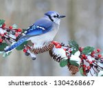 A winter Bluejay on a festive branch with red berries.