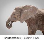 Portrait Of Elephant Against...
