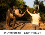 an elephant stretches its trunk ... | Shutterstock . vector #1304498194