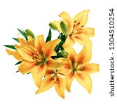lily flowers painted in yellow... | Shutterstock . vector #1304510254