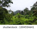 foggy forest landscape | Shutterstock . vector #1304534641