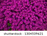 spring field of fragrant...   Shutterstock . vector #1304539621