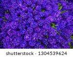 spring field of fragrant...   Shutterstock . vector #1304539624