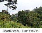 foggy forest landscape | Shutterstock . vector #1304546944