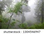 foggy forest landscape | Shutterstock . vector #1304546947