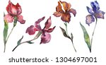 red and purple irises. floral... | Shutterstock . vector #1304697001