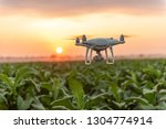 flying drone above the tobacco... | Shutterstock . vector #1304774914
