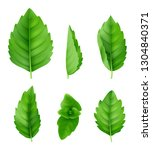 mint leaves realistic. closeup... | Shutterstock .eps vector #1304840371