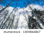 bottom view of trees and firs ... | Shutterstock . vector #1304866867