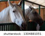 bjelovar  croatia   september ...   Shutterstock . vector #1304881051
