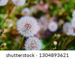 head of dandelon blowball... | Shutterstock . vector #1304893621