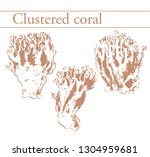 clustered coral  ramaria.... | Shutterstock .eps vector #1304959681
