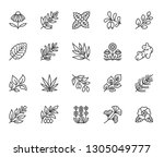medical herbs flat line icons.... | Shutterstock .eps vector #1305049777
