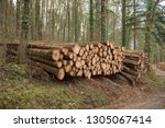 timber stack of recently felled ... | Shutterstock . vector #1305067414