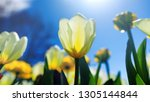 Easter Background With White...