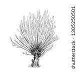 cartoon doodle drawing... | Shutterstock . vector #1305250501