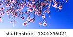 sprouts of magnolia tree on... | Shutterstock . vector #1305316021