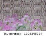 sweet pea flower | Shutterstock . vector #1305345334