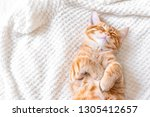 Stock photo ginger cat sleeping on soft white blanket cozy home and relax concept cute red or ginger cat 1305412657