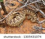 A Large Rattlesnake  Great...