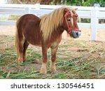 Mini Dwarf Horse In A Pasture...