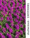 floral spring background or...   Shutterstock . vector #1305550081