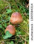 Two Beautiful Little Mushrooms...