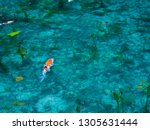 a transparent and beautiful... | Shutterstock . vector #1305631444