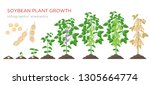 soybean plant growth stages... | Shutterstock .eps vector #1305664774