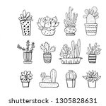 cactus and succulent plants in...   Shutterstock .eps vector #1305828631