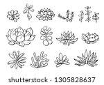 succulent plants set. vector...   Shutterstock .eps vector #1305828637