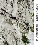 winter landscape in the... | Shutterstock . vector #1305871507