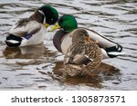on the river in winter  three... | Shutterstock . vector #1305873571