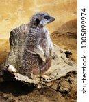 watcher at the zoo | Shutterstock . vector #1305899974