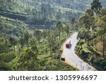 bus on the road through tea... | Shutterstock . vector #1305996697
