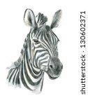Watercolor Illustration. Zebra.