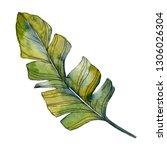 green leaf plant botanical... | Shutterstock . vector #1306026304