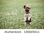 Cute Dog Sitting Up In A Field