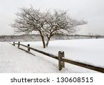 Lone Bare Tree In The Winter I...