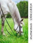 white horse is eating of grass | Shutterstock . vector #1306118314