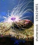 sea anemone  tube anemone  copy ... | Shutterstock . vector #1306214851