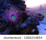 sea anemone  tube anemone  copy ... | Shutterstock . vector #1306214854