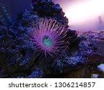 sea anemone  tube anemone  copy ... | Shutterstock . vector #1306214857